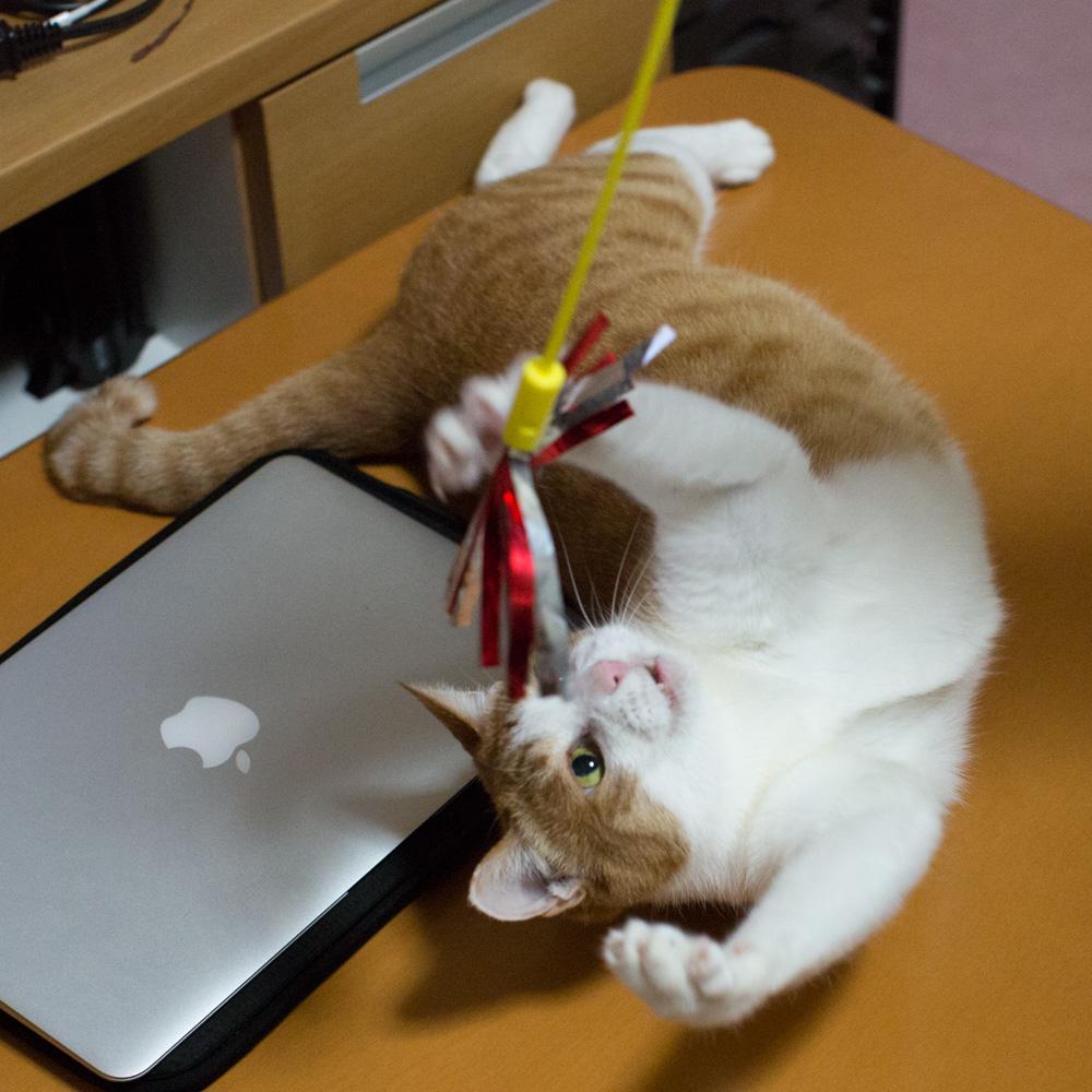 TVの裏から懐かしいネコじゃらしが出てきたので pic.twitter.com/05C5m9GjuK