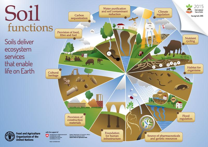 Check out this infographic on soil functions by @FAOKnowledge!  #globalsoilweek #IYS2015 http://t.co/w2CjhH9bq0
