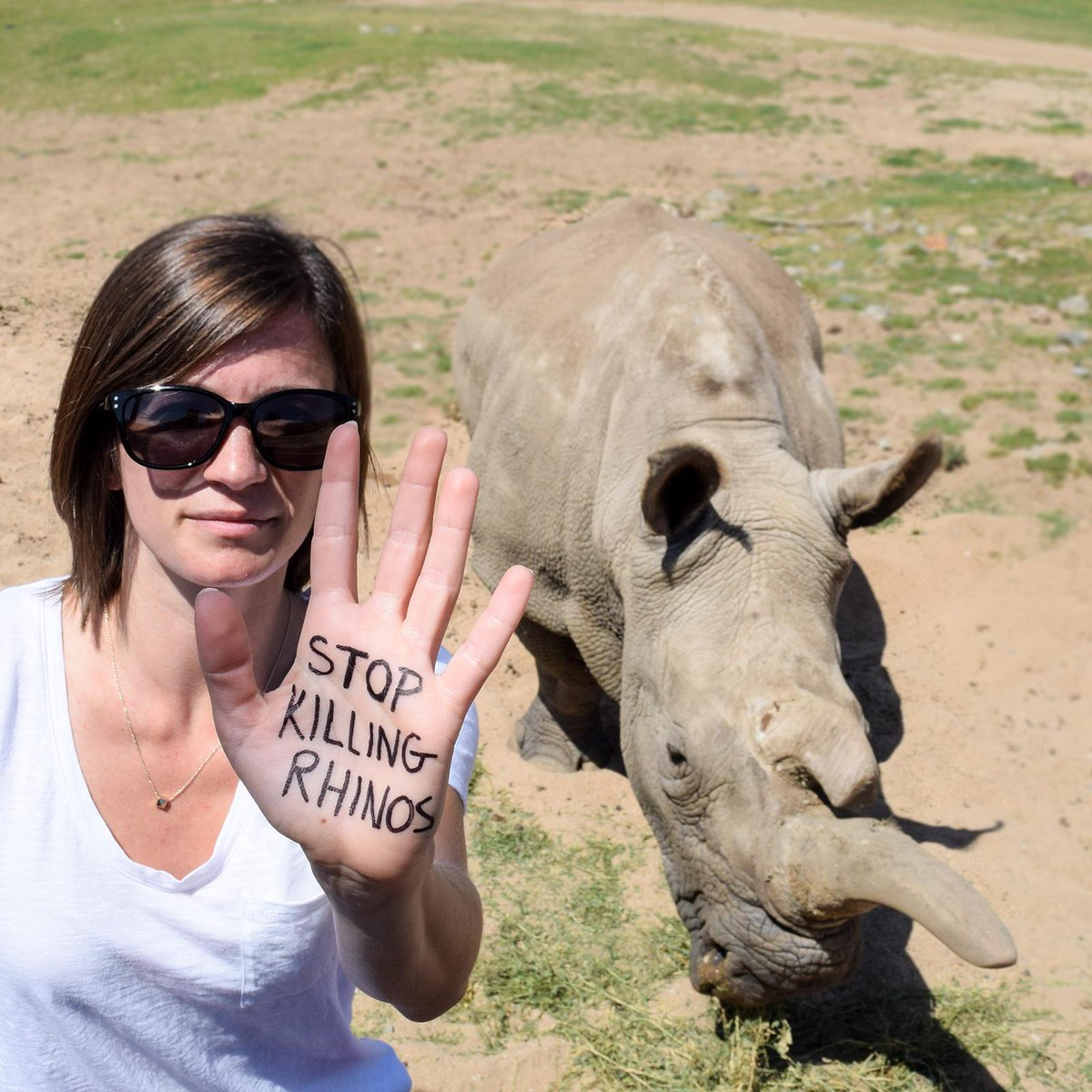 .@rickygervais please lend a hand & spread the word about the plight of rhinos. #Rally4Rhinos http://t.co/m37euRZpBU http://t.co/6TuI5laxLF
