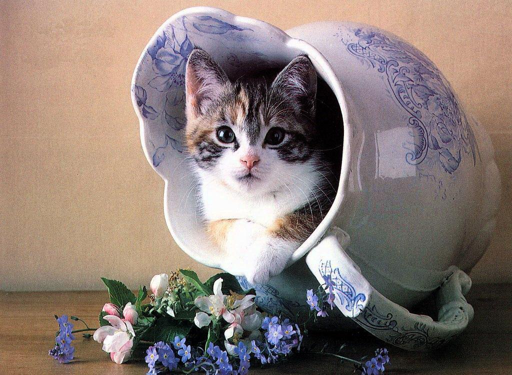 Открытки с добрым днем с котами, клиентов