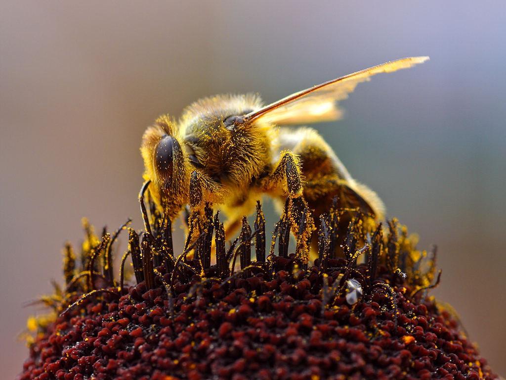 когда картинки трудолюбивые пчелы меня скорее ведущий