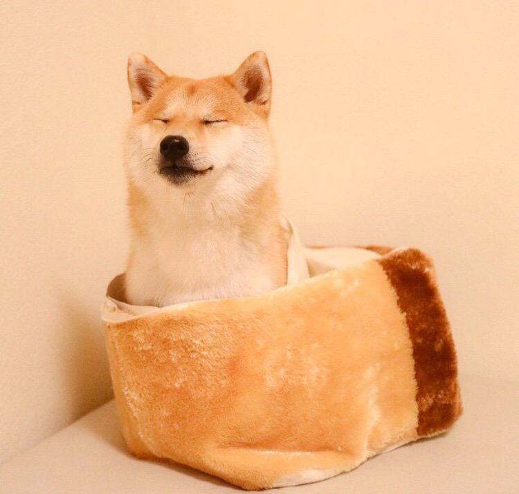 言ってみれば僕は、組織の犬ですよ http://t.co/QkiTVnNv3P