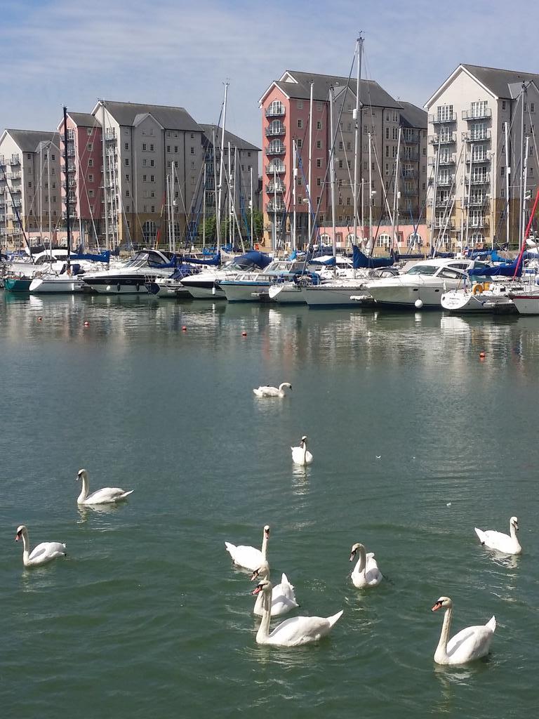 Portishead Marina... Swans look friendly... http://t.co/pjPpZbgNVe