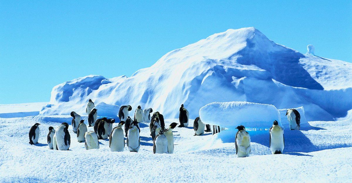 On average, emperor penguins grow to be 3.8 feet tall >> http://t.co/HpD6bwgzhQ