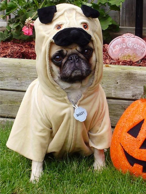 0 replies 4 retweets 7 likes & Dogs in Costumes (@DogsinCostumes) | Twitter