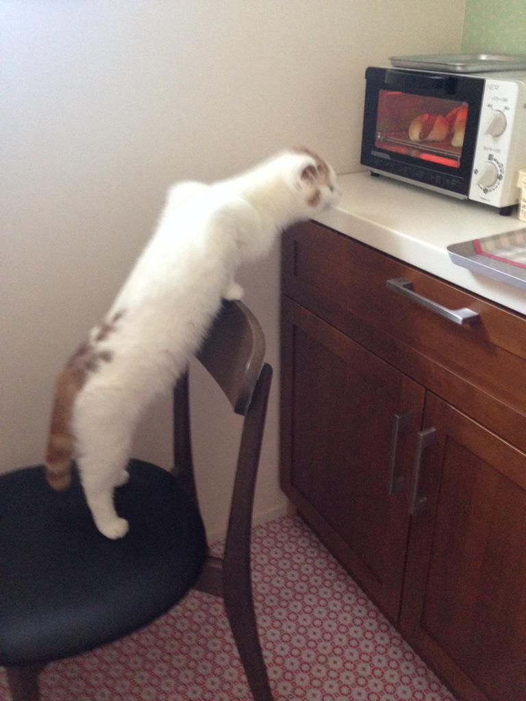 猫に、ホットドッグ焦げないか見張っておいてって頼んだらコック長かっつーくらい見張ってくれている pic.twitter.com/0qal1LaHX4
