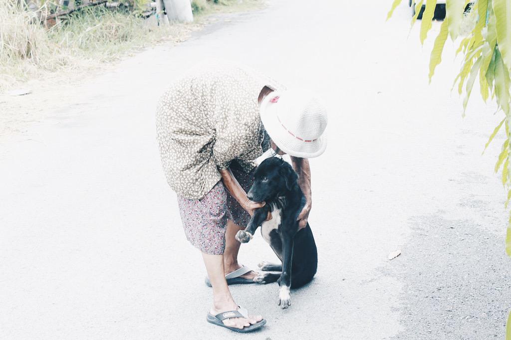 """#ยายชะอ้อน  ต้องให้อาหารหมา130กว่าชีวิต เคยถามเหตุผลว่า ทำไมต้องให้ด้วยล่ะยาย """"ยายก็ไม่รู้ มันตอบไม่ได้ ยายรักหมา"""" http://t.co/KvOe5ux0r2"""