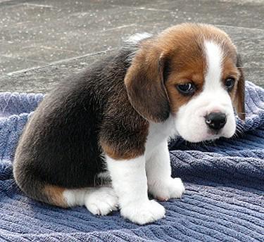 "Wesley Chu on Twitter: ""The saddest thing about the Sad ...  Sad"