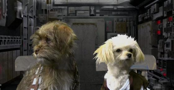 Come to the Bark Side. #MayThe4thBeWithYou - @DepressedDarth  http://t.co/yt3IM66Y7q http://t.co/cFQWHG7pFE