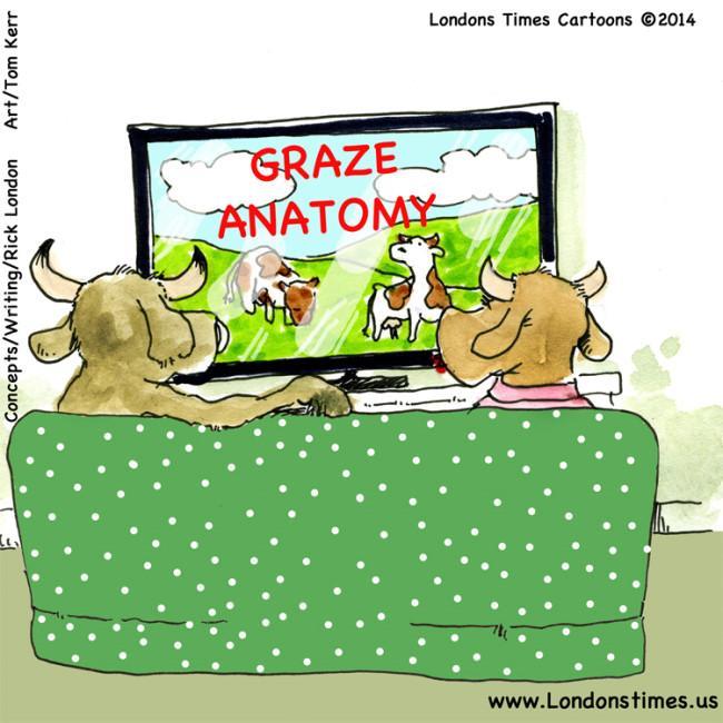 Cows #GreysAnatomy by @LTCartoons #humor...