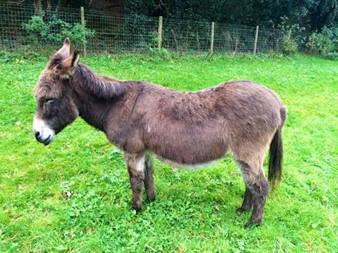 This donkey was stolen today from Old Oxted, Surrey. He has been my friend for MANY years PLEASE SHARE http://t.co/fWoKYQWcU6