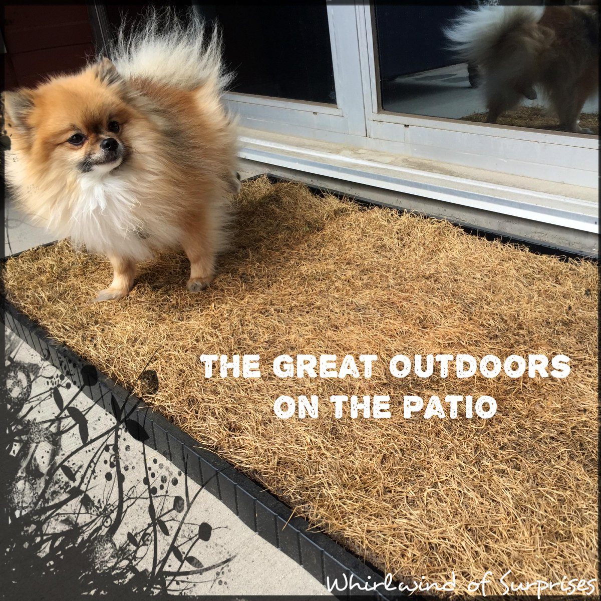 indoor or patio grass for dogs, DoggieLawn Review