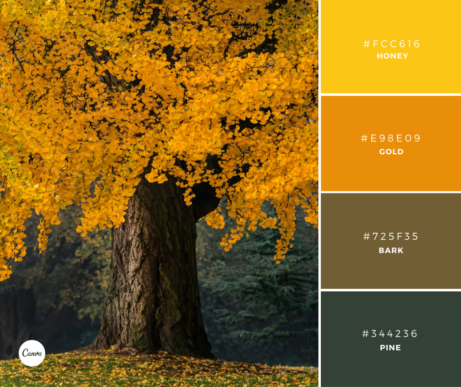 Canva On Twitter Color Combinations Harvest Gold Try