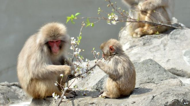 Japan zoo sorry for naming baby monkey after Princess Charlotte http://t.co/Gy3YdkTFgL #NewsfromElsewhere