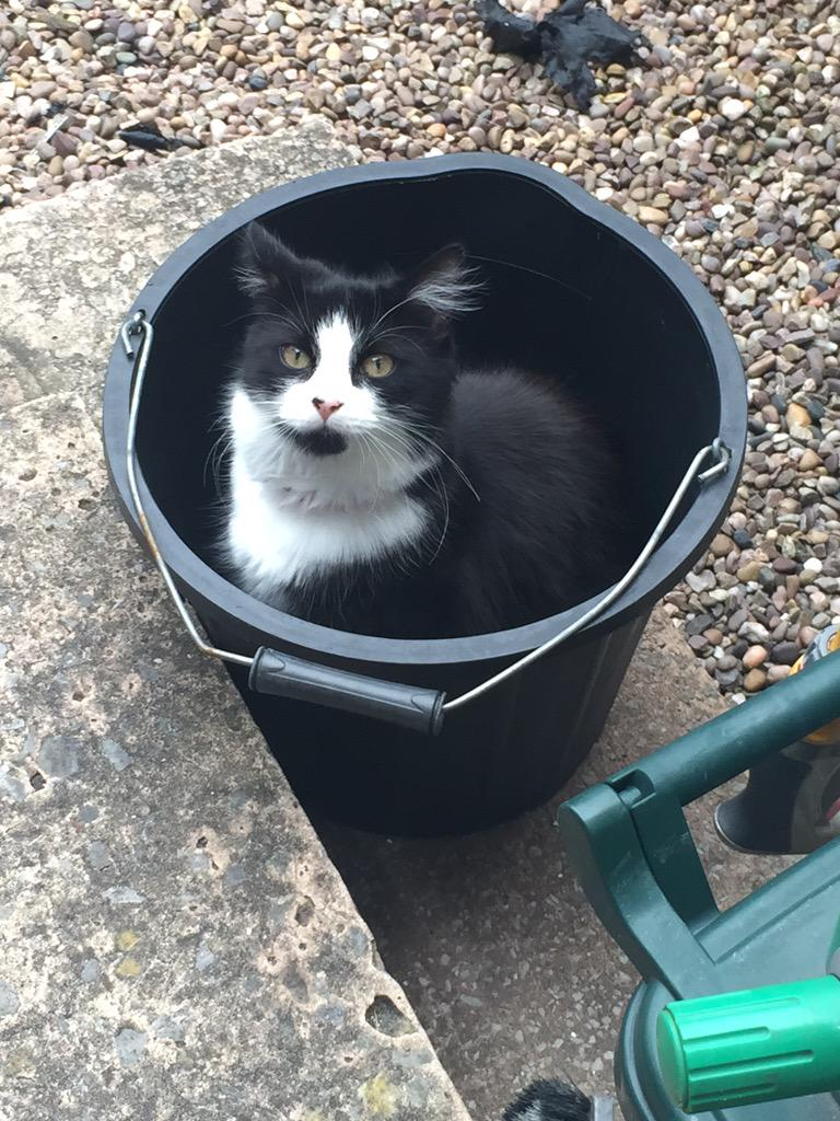 Bored with lying politicians? Here's a kitten in a bucket http://t.co/PDJkgVGrNy