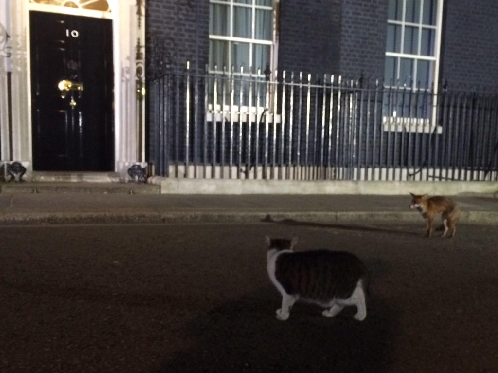 In Downing St we await the exit poll which will be on ITV at 10. Meanwhile, Larry the Cat & a fox having a face off