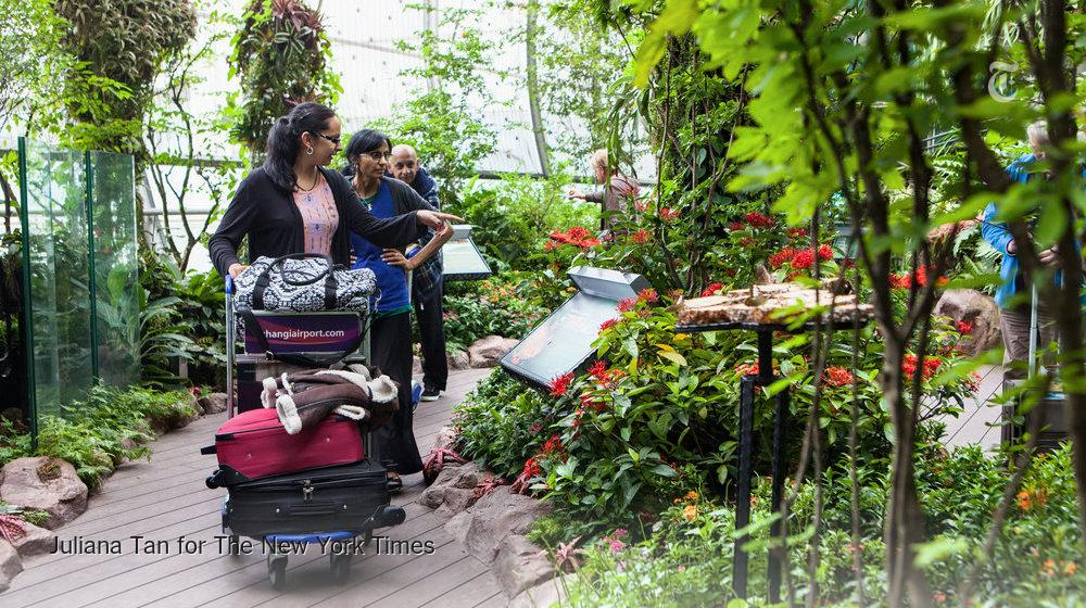 A butterfly garden in an airport? A reason why Singapore's airport is ranked No. 1 http://t.co/Q34JHueTm6 http://t.co/YBOIWHriKP