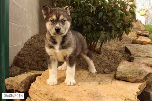 Buckeye Puppies on Twitter: