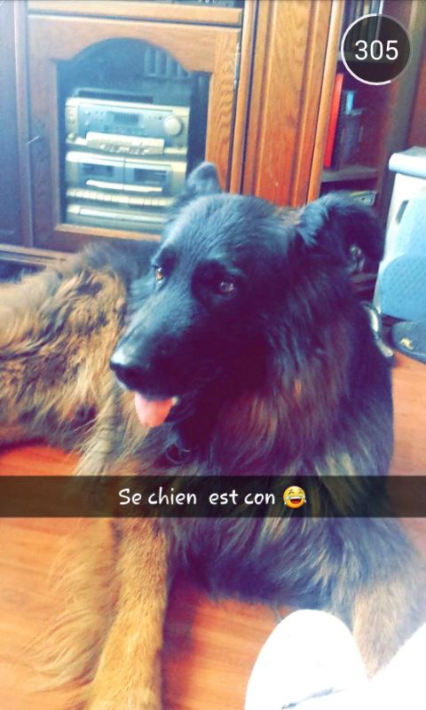 Melodyquarto On Twitter Mon Chien Le Plus Beau Http