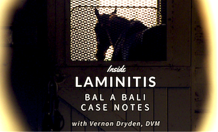 Case notes via @roodandriddle Dr Dryden on Bal a Bali's #laminitis fight, return to racing: http://t.co/sG6zObol1w http://t.co/e34gZU6k0N