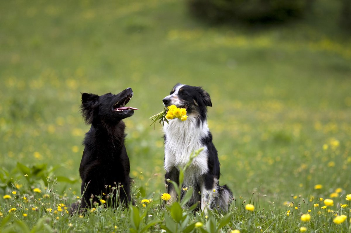 """""""A dog will teach you unconditional love. If you can have that in your life, things won't be too bad."""" -Robert Wagner http://t.co/VNwZnOEDgK"""