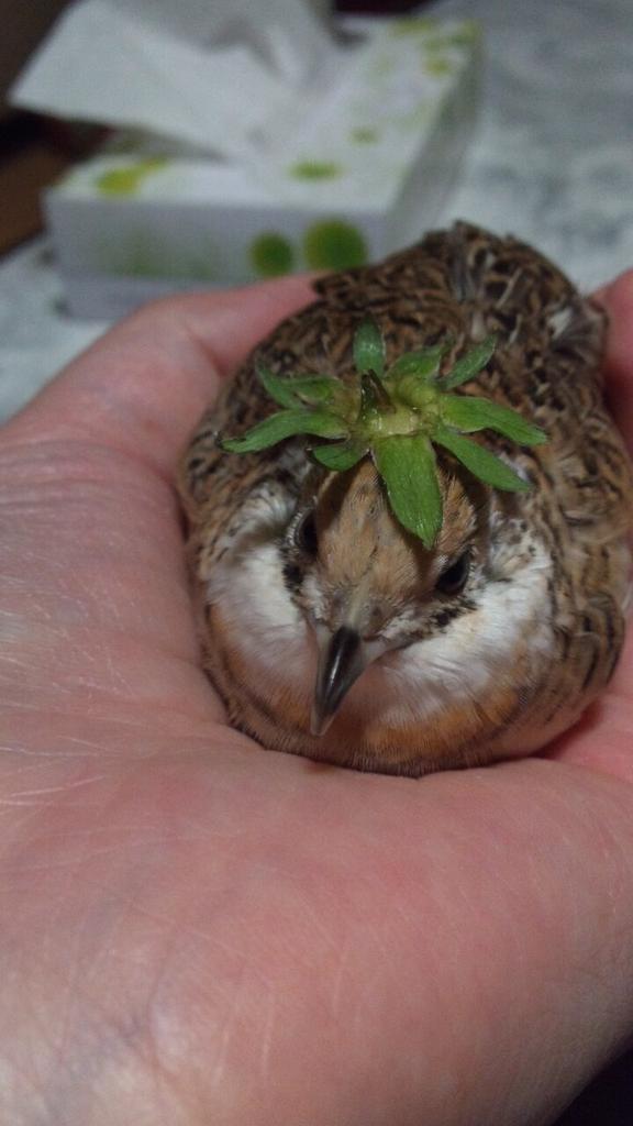 お似合いね… #うずテロ #愛鳥週間 http://t.co/bK4bFMVe85