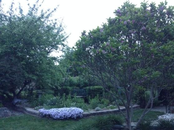 trees and garden bed in foreground to light gray sky behind