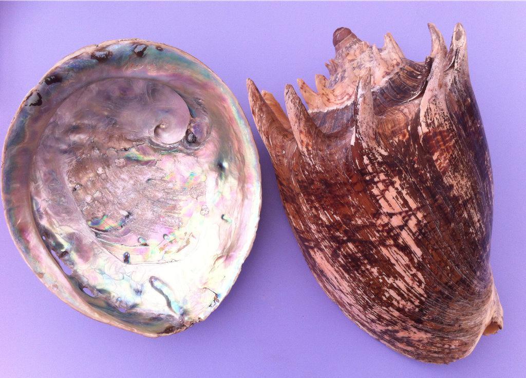 Today's shells on display @EisteddfodUrdd #Caerffili2015 for #MolluscMonday @AmgueddfaCymru http://t.co/trvm3hJTFy