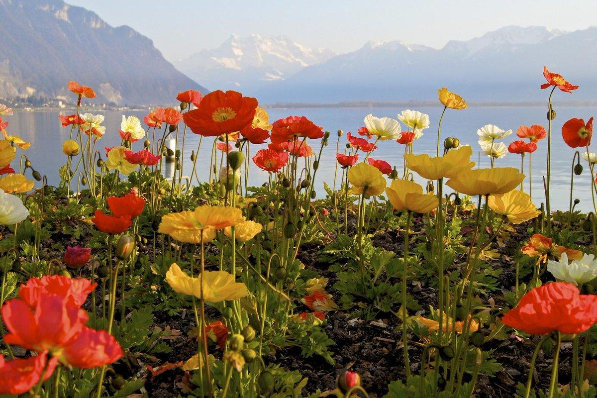 Montreux, Lake Geneva, Swiss Alps http:/...