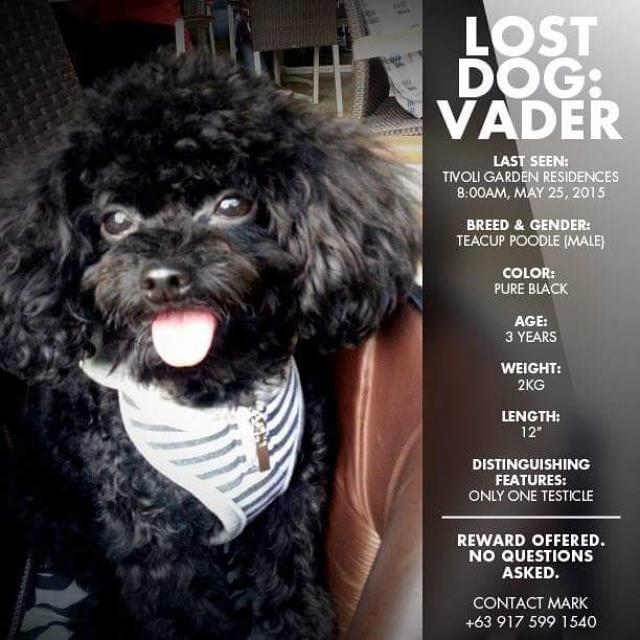 @annecurtissmith I hope you can help us find our dog. We're desperate. :( http://t.co/Usj4TJoNxM