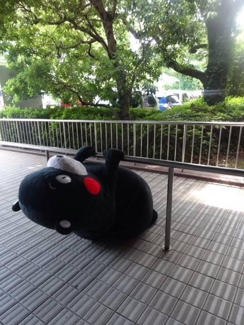 くまモン公式ツイッター「くまモンの日常」画像集
