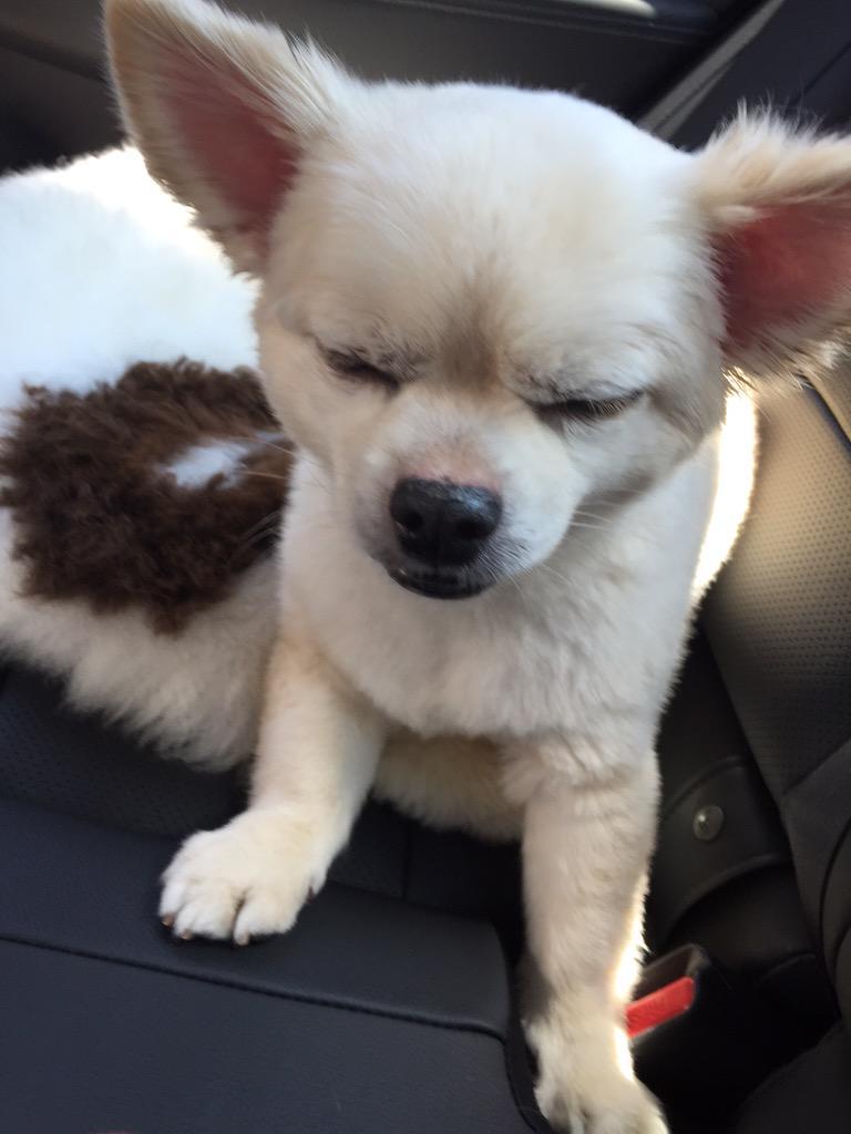眠い眠いねむいネム………🐏💭✨zzz#可愛いすぎる pic.twitter.com/Wej1JqTDRO