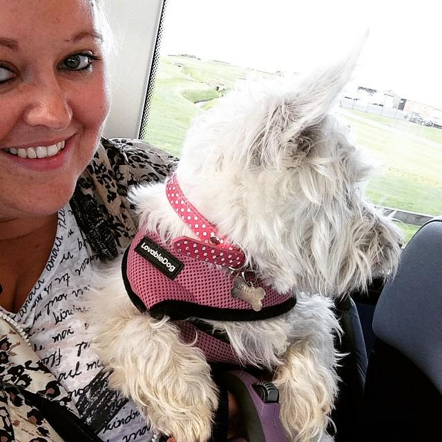 @whit_by by bazzleboo Rosie's first bus ride! #Rosie #Bus #Sandsend #Whitby #Westie #WestiesOnInstagram #WestHighla… http://t.co/TiMZwy2LXR