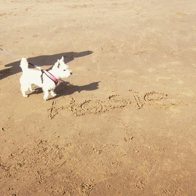 @whit_by by bazzleboo #Rosie #Westie #WestHighlandTerrier #WestiesOnInstagram #pooch #Puppy #WhiteDog #Whitby #Beac… http://t.co/S03XpUjutb