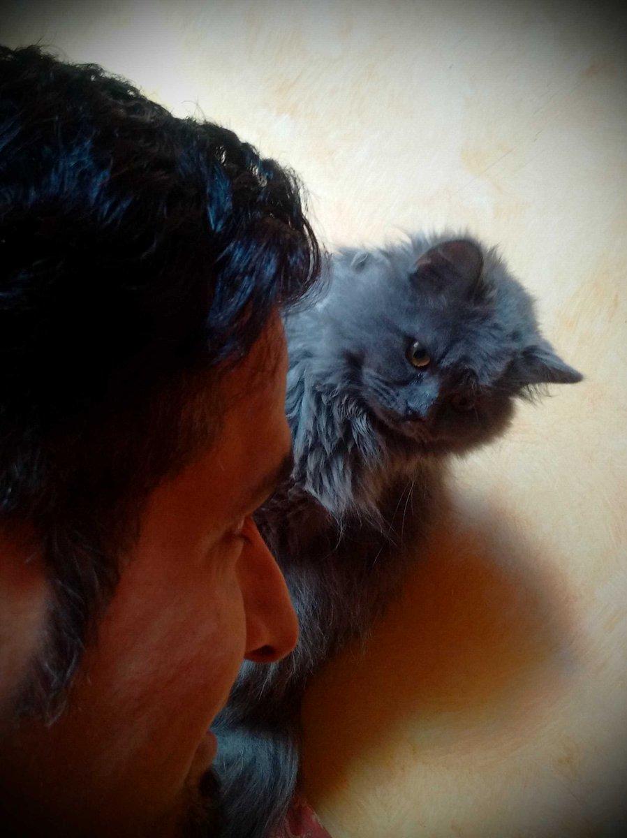 Https Www Rt Com Viral  Saudi Ban Cat Selfies