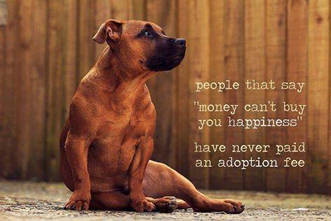 We couldn't agree more!  Adopt your new best friend via PetRescue today: http://t.co/uscfz9084I http://t.co/FFLhLfAvyk