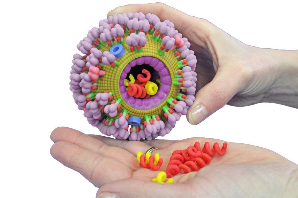 Modelo en plástico del virus de la gripe/influenza #microMOOC http://t.co/diJ9wSPYH3