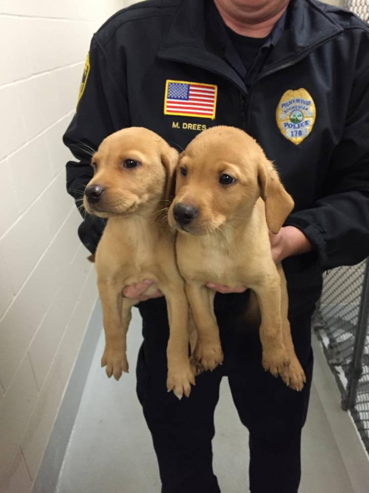 Meet the newest members of the #rochmn police department. http://t.co/nvbVaktXeW http://t.co/7ACI36uiwq