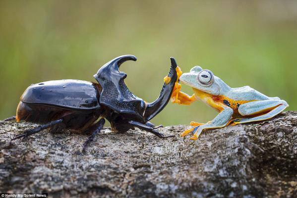 カエル凄い楽しそう http://t.co/C02NYtsR4d