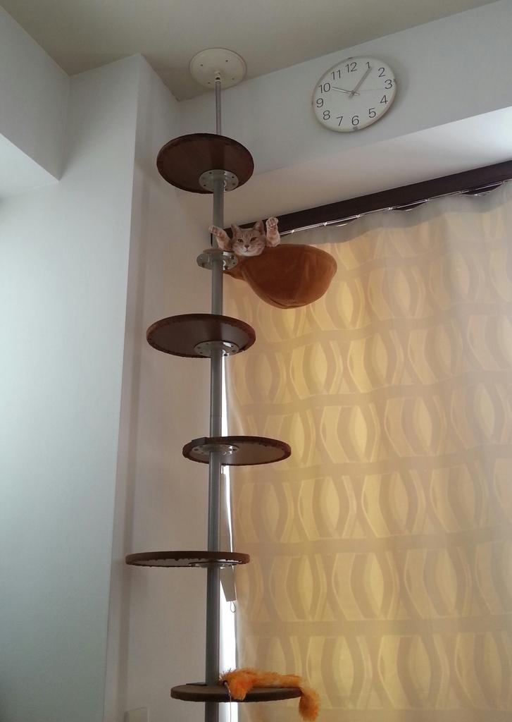 謎のポーズのままオブジェ化して、部屋に溶け込んでいる猫。 pic.twitter.com/VTms7poryz