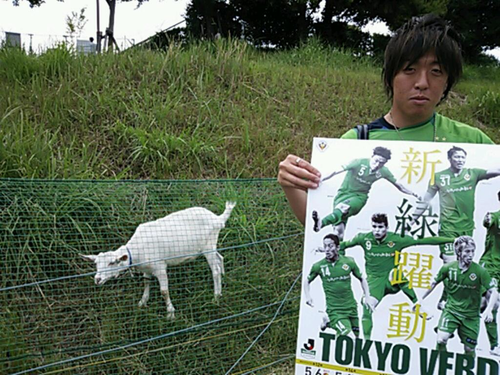 #稲城 若葉台でのポスター掲出活動。 若葉台と言えば、ヤギ。 #全力さん の持つポスターを「美味しそう…」とゆー眼で眺めていた。  ご協力頂いた皆さん、ありがとうございました!  #verdy #inagi #j楽 #緑パートナー募集 http://t.co/JcmvHVHEZB