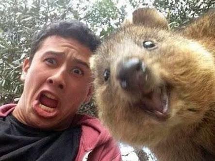 クワッカワラビーと人間の自撮り、人類と動物の本来あるべき姿な気がして、考えさせられるな。 pic.twitter.com/AWFitn5Dv5