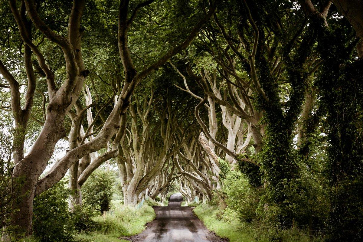фото таинственный лес северная ирландия следует отдавать свитерам