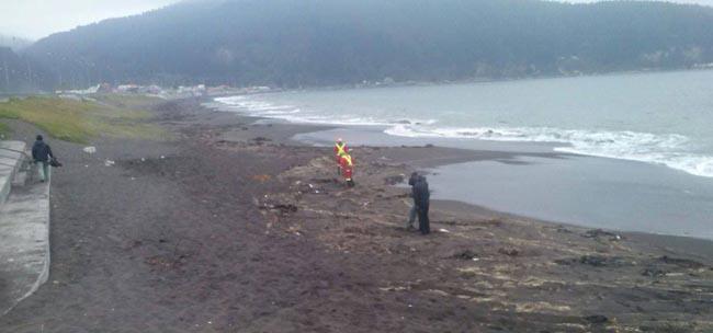 Cile: Moria misteriosa di uccelli, autorità aprono inchiesta