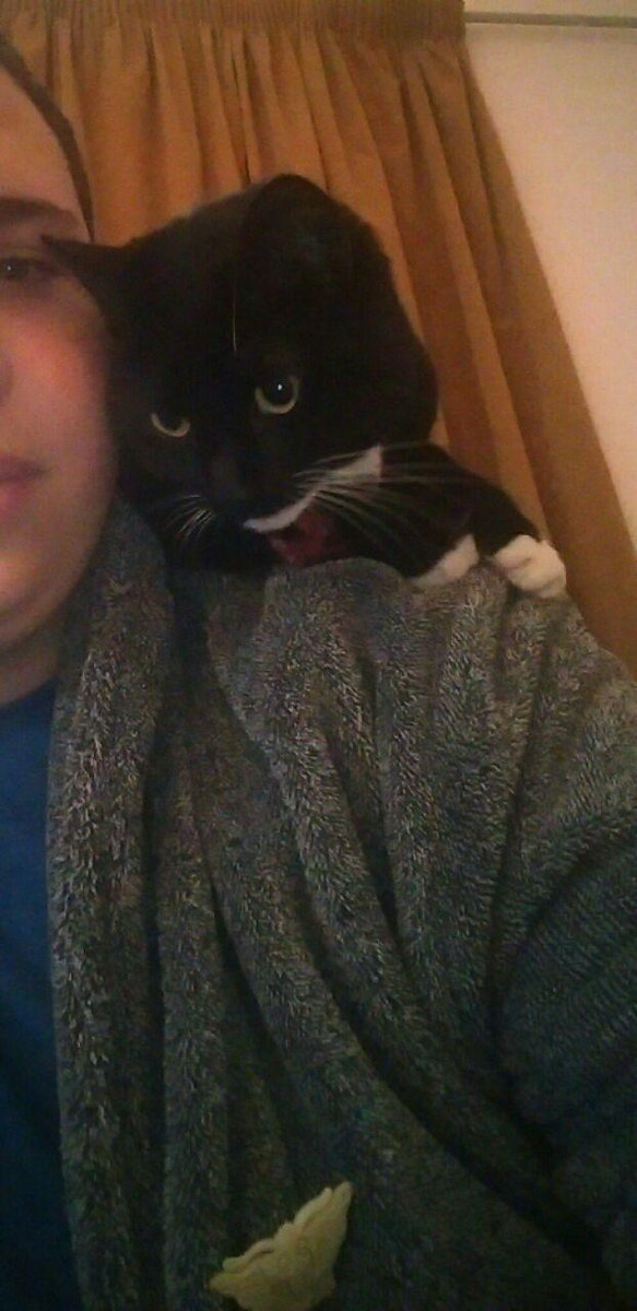 @MissingPetsGB please help #findPip the lost cat. she's b&w; home is Offord Rd, off Caledonian Rd. pls RT. http://t.co/miccp2oPKS #findPip