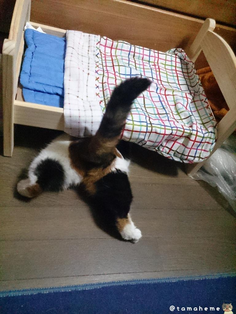 日曜日に念願のベッドを買ったんですけどね、うん……予想はしてたよ。上に乗ってほしかった…… pic.twitter.com/6NUttimvk1