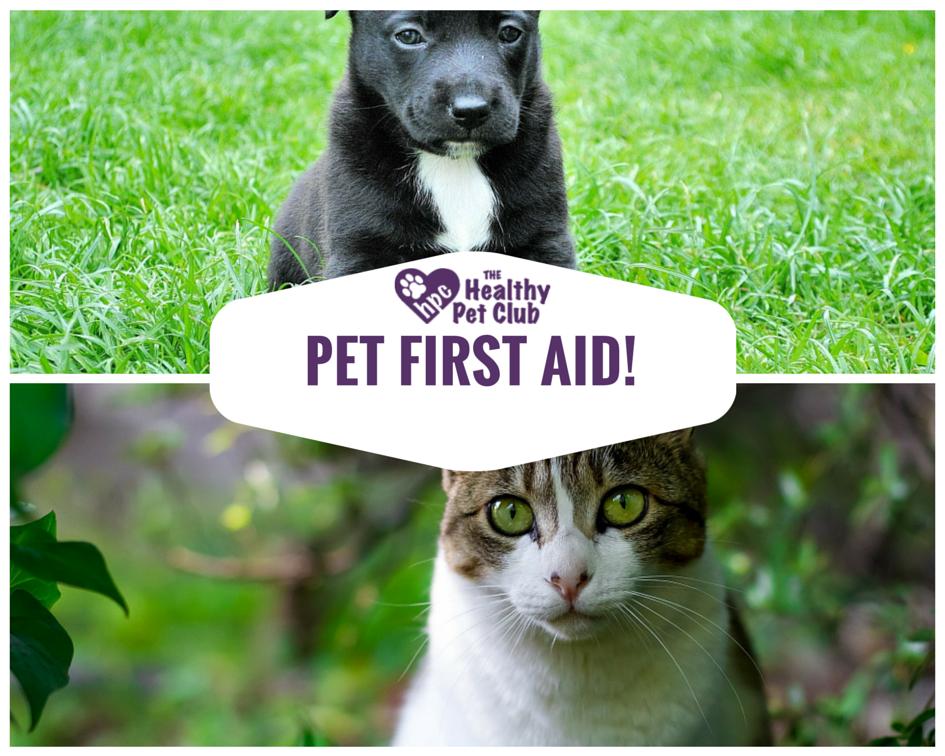 The Good Vet and Pet Guide - fr-fr.facebook.com