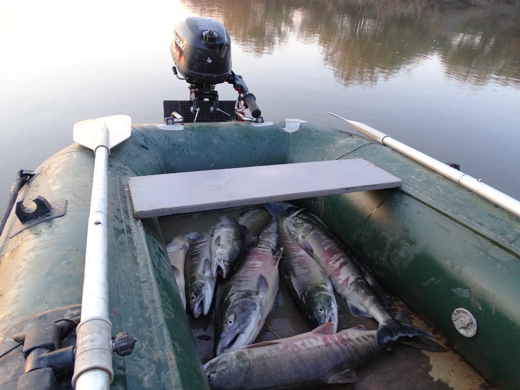 Рыбалка кетовая на амуре 2019