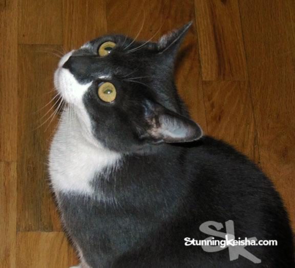 Gimme some treats.. Now! #BlogPawsChat http://t.co/q0nMByAdUa