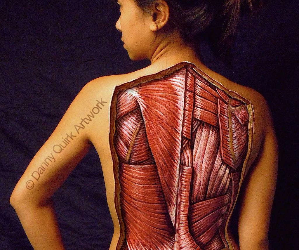 Art & Anatomy on Twitter: \
